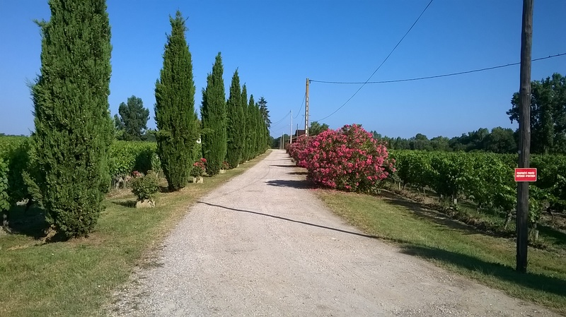 Les vignobles de Fronton