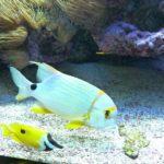 Aquarium Monaco