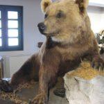 maison de l'ours à St Lary