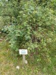 Sentier botanique de Limogne